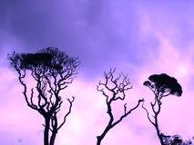 Skys púrpura foto de archivo