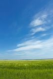 Skyscape over barley field Stock Photo