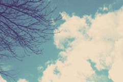 Skyscape. Trees and clouds in the sky Royalty Free Stock Photography