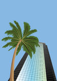 Skyscraper  and  palm  tree Stock Photography