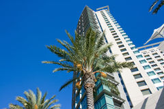 Skyscraper and palm tree Royalty Free Stock Photography