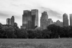 Skyscrapers seen from turf level from Central Park - monochrome, zoomed in somewhat stock photo