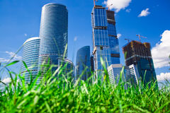 Skyscrapers and grass Royalty Free Stock Images