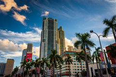 Skyscrapers and palm trees in downtown Miami, Florida. Stock Photo