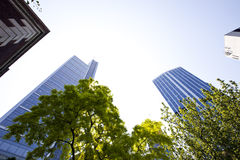 Skyscrapers seen though trees Royalty Free Stock Photo