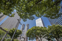 Skyscrapers and trees Stock Images