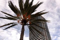 Skyskrapa på den barcelona stranden med palmträdet arkivbilder