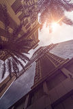 Skyskraper Palms sun Royalty Free Stock Images