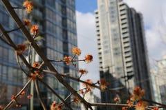Skyskrapor för begreppsvårstad Royaltyfria Bilder