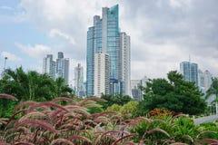 Skyskrapor med växter i förgrund Panama Royaltyfri Fotografi