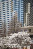 Skyskrapor och blomma körsbärsröda träd, New York City Arkivfoto