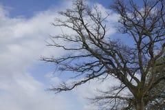 skytree Royaltyfri Foto
