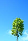 skytree Royaltyfri Bild