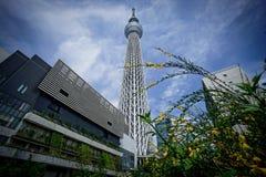 Skytree de Tokyo image stock