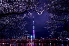 Skytree och Sakura på natten royaltyfri fotografi
