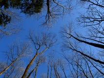skytrees Fotografering för Bildbyråer