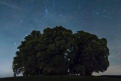 Skyttestjärnor över träd arkivfoto