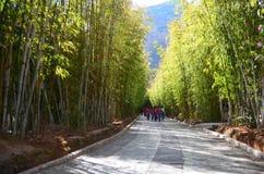 Kina parkerar, bambu Royaltyfri Foto
