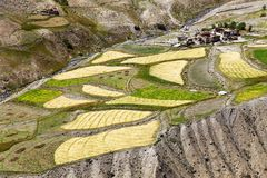 Skyumpata village - Beautiful village in Zanskar trek Royalty Free Stock Image