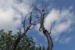 Skyview мертвых деревьев Стоковая Фотография RF