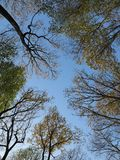 Skyview in Autumn through coloured Trees. In Slovakia royalty free stock images