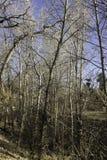 Skyward Bomen stock foto