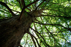 Skyward träd Arkivfoton