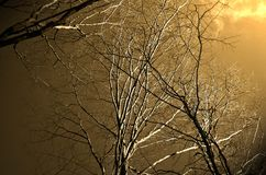 Skywoods foto de archivo libre de regalías