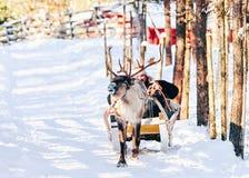 Släde för manridningren i Finland Lapland i vinter royaltyfri fotografi