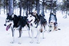 Släde på slädehunden Royaltyfri Fotografi