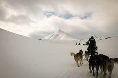 Slädehunden turnerar Fotografering för Bildbyråer