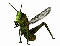 Släkt gräshoppa Arkivfoto