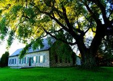 Släkt- hus under stort träd royaltyfria foton
