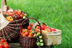 Släktklenodvariationstomater i korgar på den lantliga tabellen Röd färgrik tomat -, gult, apelsin Skördgrönsakmatlagning Royaltyfri Bild