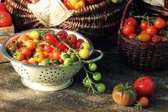 Släktklenodvariationstomater i korgar på den lantliga tabellen Röd färgrik tomat -, gult, apelsin Skördgrönsakmatlagning Royaltyfria Foton