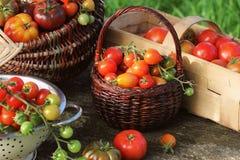Släktklenodvariationstomater i korgar på den lantliga tabellen Röd färgrik tomat -, gult, apelsin Skördgrönsakmatlagning Arkivfoto