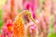 Slända på blomma Arkivfoto