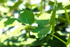 Slända på ett grönt blad arkivbild