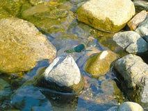 Slända på floden arkivfoton