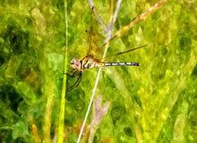 Slända som sätta sig på gräsvattenfärg Arkivfoto