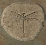 sländafossil royaltyfri fotografi