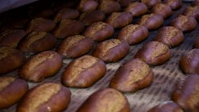 Släntra av bröd på produktionslinjen i bagerit Baked släntrar av bröd i bagerit, lager videofilmer
