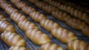 Släntra av bröd på produktionslinjen i bagerit Baked släntrar av bröd i bagerit, arkivfilmer