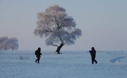 Släpfotografer vid ett rimfrostträd Royaltyfri Bild