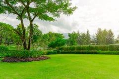 Slät gräsmatta för nytt grönt Burmuda gräs som en matta med kurvformen av busken, träd på bakgrunden, bra mainternancelanscapes i arkivbild
