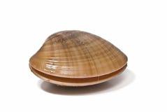 slät vid liv mussla Arkivfoton