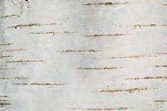 Släta björkskället texturerar royaltyfri foto