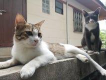 slätar det tom&jerry tvilling- djuret för katten royaltyfri fotografi