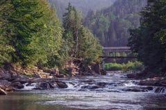 Slätt flöde av floden i skogen Royaltyfri Fotografi