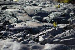 Slätt och att bölja yttersida av djupfryst pahoehoelava Djupfryst lava som in rynkas gobeläng-som veck och rullar som liknar det  Arkivfoton